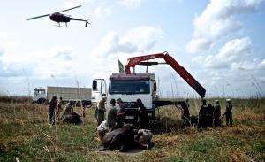 Capture in Mozambique